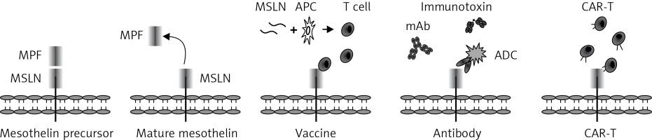 https://www.archivesofmedicalscience.com/f/fulltexts/106265/AMS-17-5-106265-g002_min.jpg